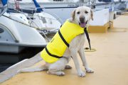 Chaleco salvavidas perro