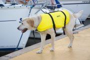 perro chaleco salvavidas